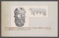 Ammonites monile inaequinodus - - Print - Iconographia Zoologica - Special Collections University of Amsterdam - UBAINV0274 091 01 0079.tif