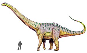 1877 in paleontology - Amphicoelias true size