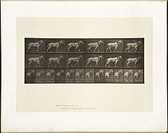 Animal locomotion. Plate 571 (Boston Public Library).jpg