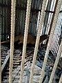 Animal mammifère au jardin botanique et zoologique de l'UAC.jpg