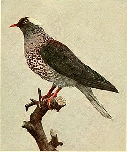 Annalen des Naturhistorischen Museums in Wien (1912) (17578352854).jpg