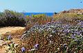 Apollonia Flowers (3607453621).jpg