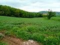 Arable land near Round Wood - geograph.org.uk - 1346227.jpg
