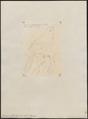 Arremon erythrorhynchus - 1855 - Print - Iconographia Zoologica - Special Collections University of Amsterdam - UBA01 IZ15900367.tif