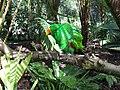 Australia Queensland parrots - panoramio.jpg