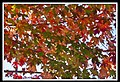Autumn Leaves begin to fall-057 (5754457634).jpg