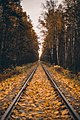 Autumn Stories (236672169).jpeg