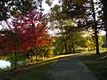 Autumn Walking Path.JPG