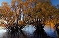 Autumn at Lake Tekapo NZ (1) (8670153841).jpg