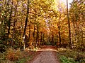 Autumn forest - Flickr - Stiller Beobachter (3).jpg