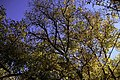 Autumn in Ourika Valley (11278022585).jpg
