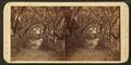 Avenue in Bonaventure, by Wilson, J. N. (Jerome Nelson), 1827-1897 3.png