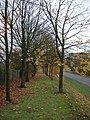 Avenue with no leaves - geograph.org.uk - 1033663.jpg
