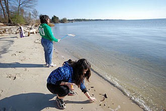 Beachcombing - Beachcombing at Belle Isle State Park in Virginia, United States