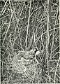 Baby birds at home (1912) (14751470515).jpg