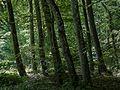 Baden-Württemberg, Remseck am Neckar, Naturschutzgebiet unteres Remstal-3.jpg