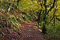 Ball Hill Footpath, Okehampton - panoramio.jpg