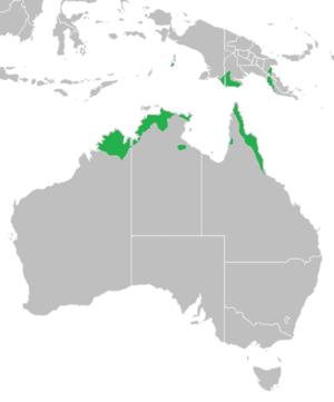 Banksia dentata - Image: Banksiadentatarge