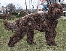 Large Black Dog Breeds With Blue Eyes
