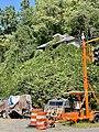 Barnard Road Crossing, Barnard, NC (50528667546).jpg
