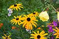 Barsana monastery flowers.jpg