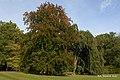 Barwy jesieni w Parku Szczytnickim - w Parku Szczytnickim - autumn in the park - panoramio (1).jpg