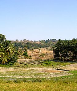 Fields in Baucau area
