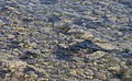 Beadnell MMB 15 Harbour.jpg