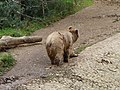 Bear (2380421180).jpg