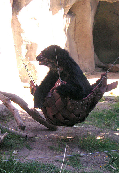 Paracord Hammock Or Death Hubpages
