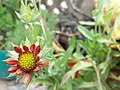 Beauty of Nature 104615.jpg