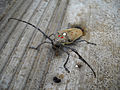 Beetle (4827320210).jpg