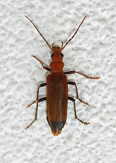 Beetle May 2009-5.jpg