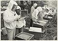 Beginnende imkers op de Zocherschool te Overveen. NL-HlmNHA 54013909.JPG