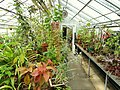 Begonia House - Wellesley College - DSC09774.JPG