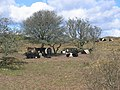 Belties - geograph.org.uk - 134940.jpg