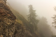 A view of trees along a mountain path in dense fog while hiking at Vens, in Saint-Pierre, Aosta Valley
