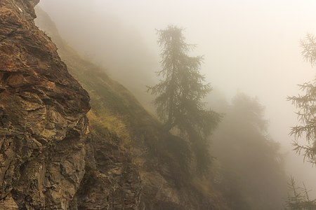 Mountain hiking Vens at Bettex in Valle d'Aosta (Italy). Trees along mountain path in dense fog.