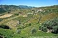 Bertelo - Portugal (7845296624).jpg