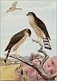 Bird-lore (1909) (14746486221).jpg