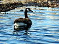 Bird back (4438426673).jpg