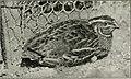 Bird notes (1919) (14565246440).jpg
