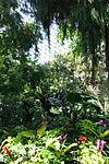 Bloedel Floral Conservatory, Queen Elizabeth Park - Vancouver, Canada - DSC07485.JPG