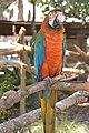 Blue & Gold Macaw.jpg