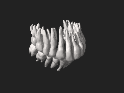 BodyParts3D Tooth.stl