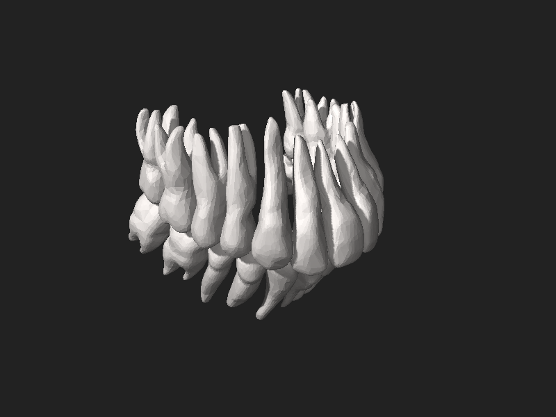 קובץ:BodyParts3D Tooth.stl