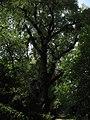 Boissow Naturdenkmal.jpg