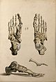 Bones of the foot. Ink and watercolour, 1830-1835?, after W. Wellcome V0008214EL.jpg