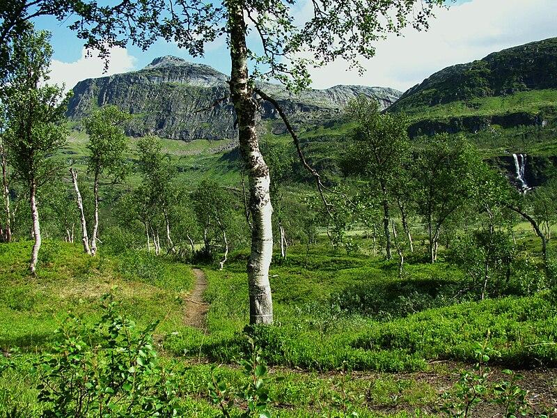 File:Boreal-birch-waterfall-Norway-adj.JPG