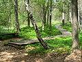 Borkovická blata- chodník a lavička.JPG